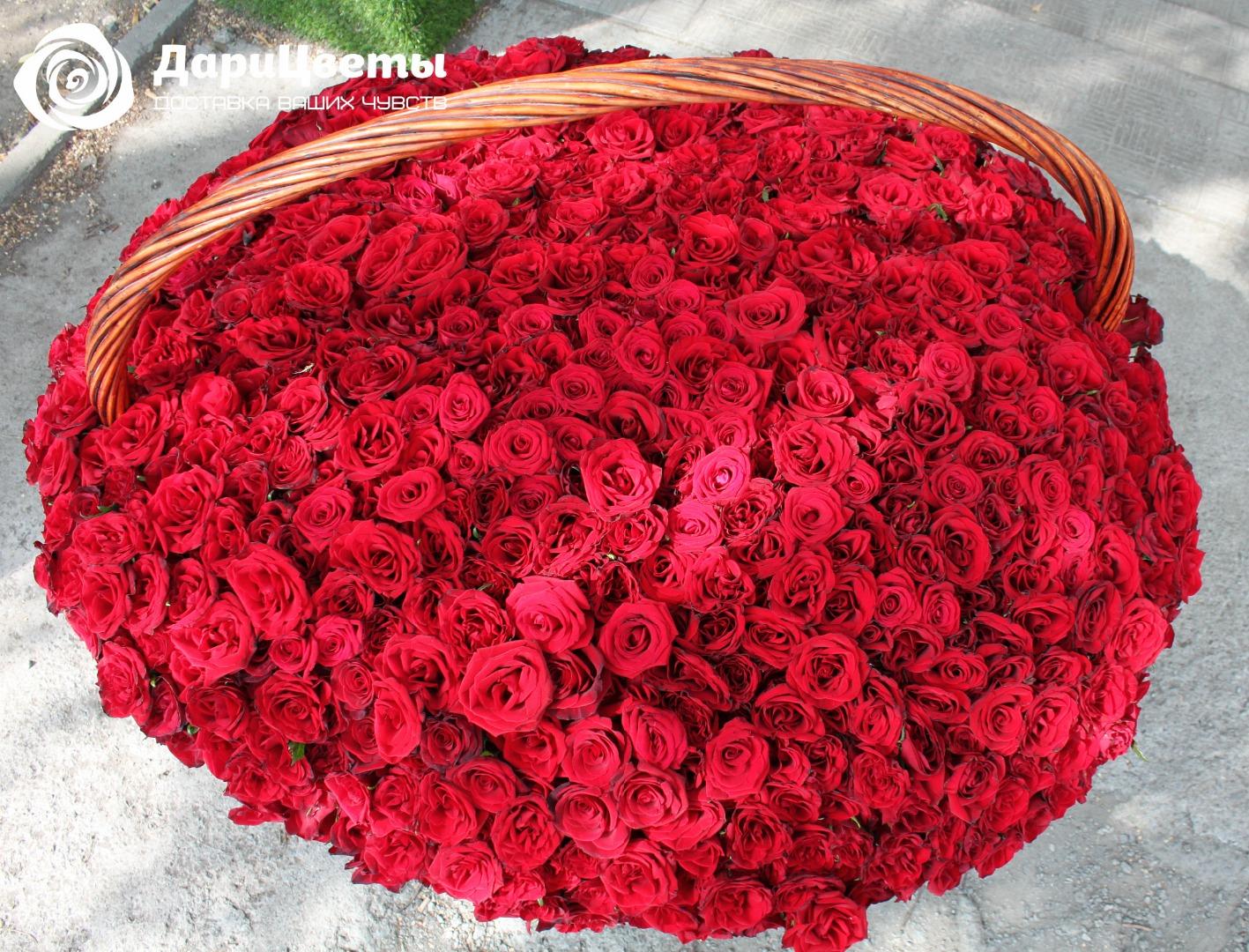 трансплацентарной живые розы картинки букеты 1001 роза довольно критически высказался
